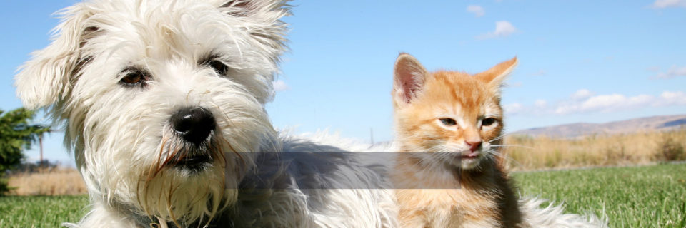From Pet Sitting to Dog WalkingWe are Smyrna's Best