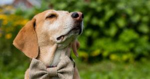 Dog Sitter Smyrna