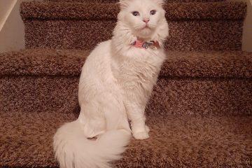 Cat Sitting Purrr-fectionists